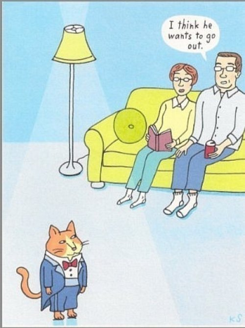Gato salir