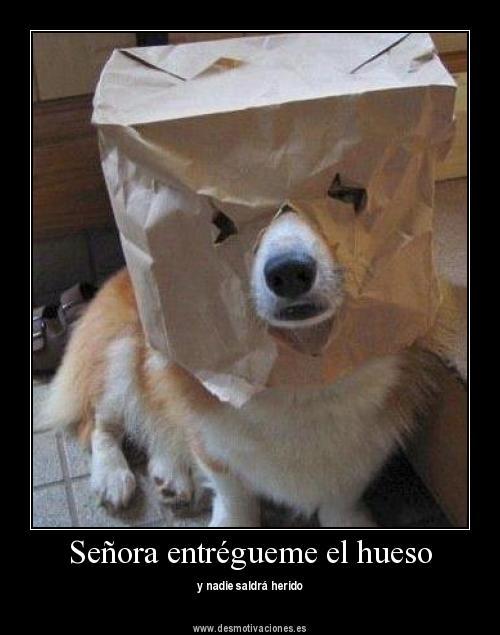 Perro atraco