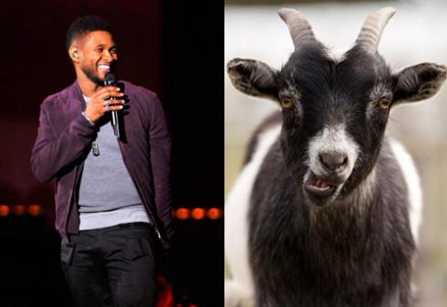 Usher_Goat-490x336