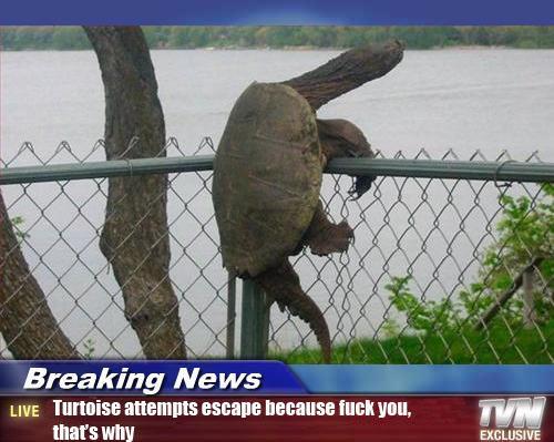 Tortuga escapando
