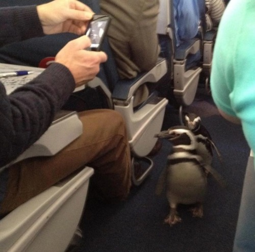 pinguins on a plane xD
