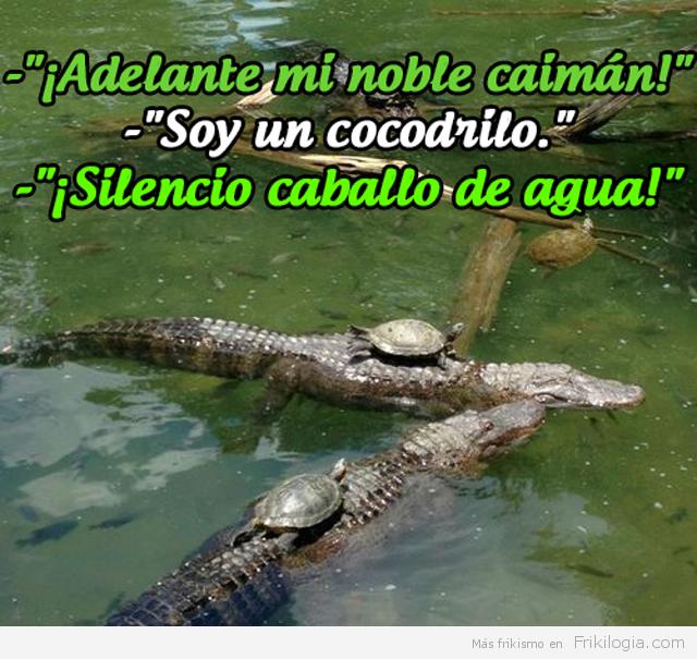 Tortugas sobre cocodrilos.