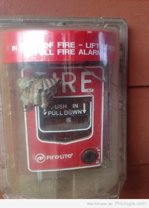 Alarma de Incendio con avispero