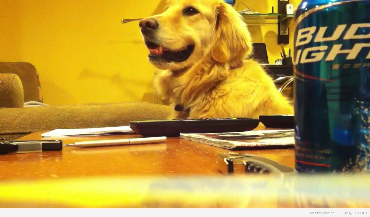 A los perros les encanta la música