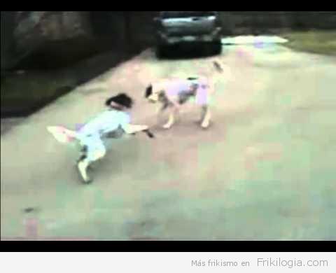 Cachorro finge su propia muerte