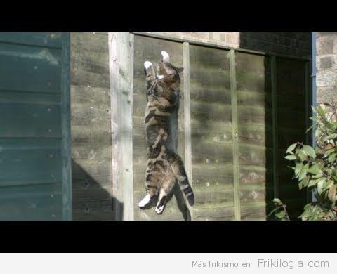 Cómo burlan los gatos a la Gravedad en SlowMotion