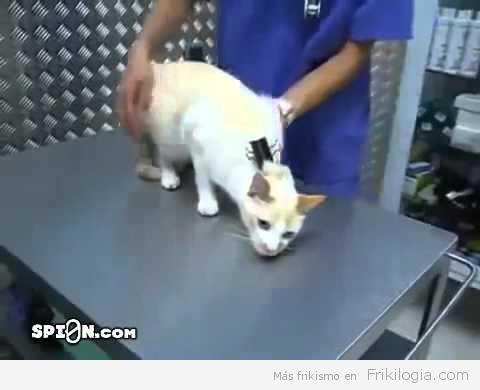 """Como """"desactivar"""" un gato"""