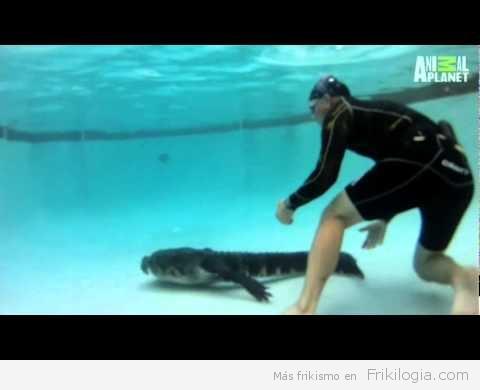Como sacar un caimán de una piscina