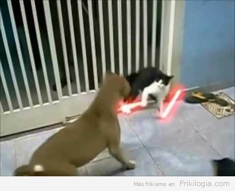 Dark Vader reencarnado en gato