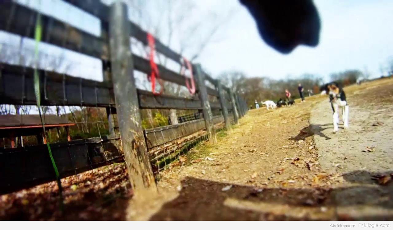 Un día en el parque de perros